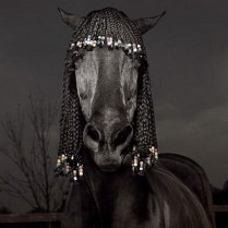 cheval-noir