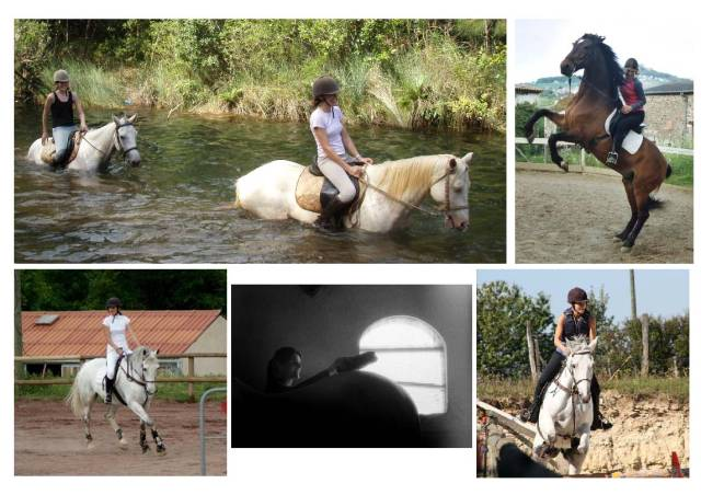 Compo photo cheval
