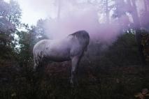 Niassa dans le tourment des bois enflammés - Emma P.