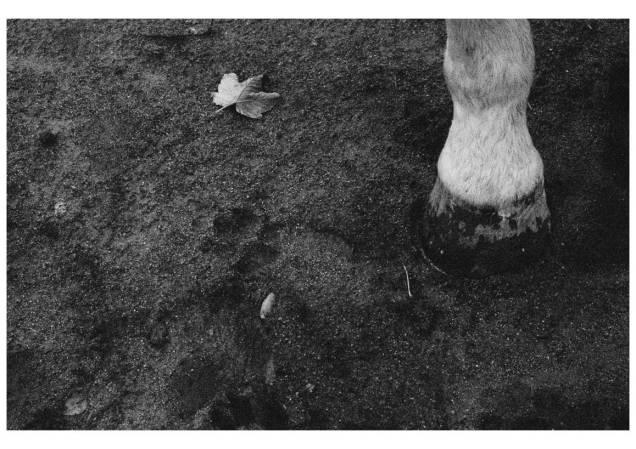Empreinte chien cheval feuille - Emma P.