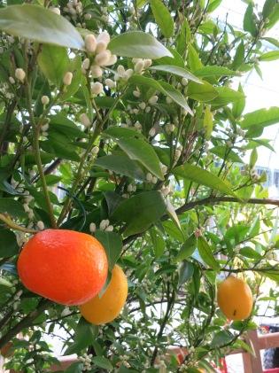 Fruits qui poussent dans la nuit !