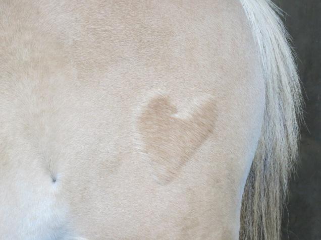 Un amour de poney - Aurélia P.