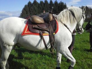 Niassa cheval de voltige