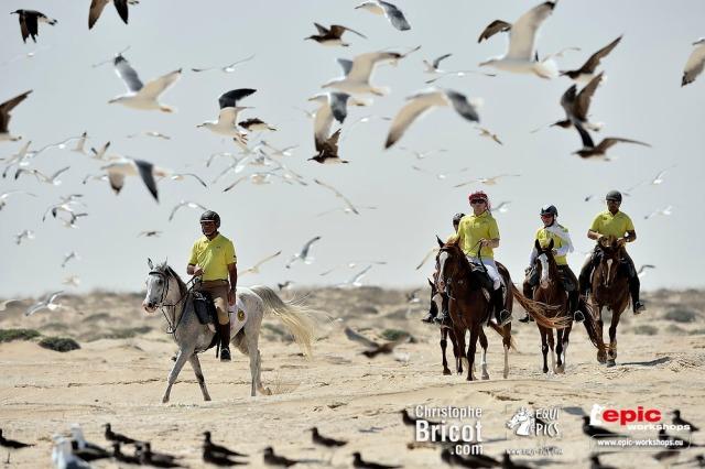 Sultanat d'Oman : Gallops of Oman (Galops d'Oman) - Course d'endurance, Raid dans le désert, race in the desert - Photo Christophe Bricot